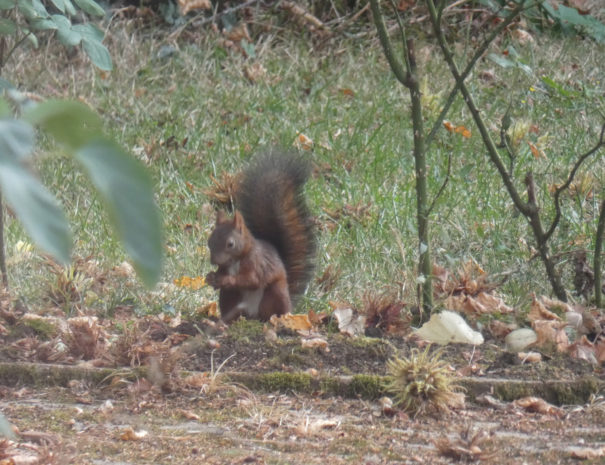 ecureuilnoisette